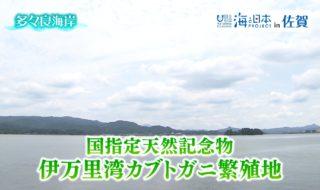 伊万里高校 カブトガニ放流1