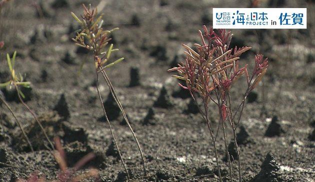 佐賀県-A・15-s01